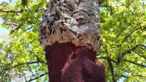 chêne liège CAGE BAGS vegan des Soeurs Boa